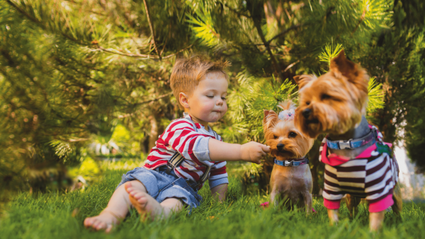 Chłopiec z psami